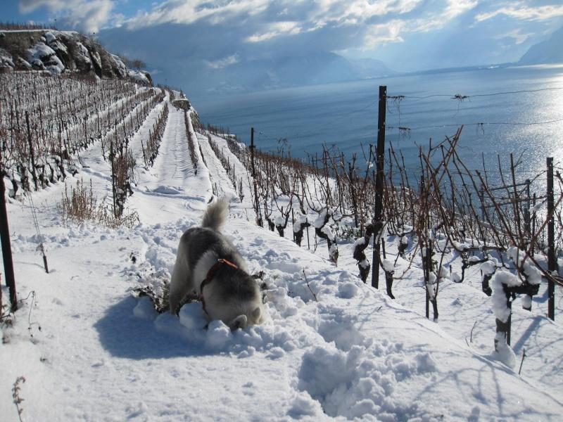 Nouvelles courses de Saskia dans la neige 1437