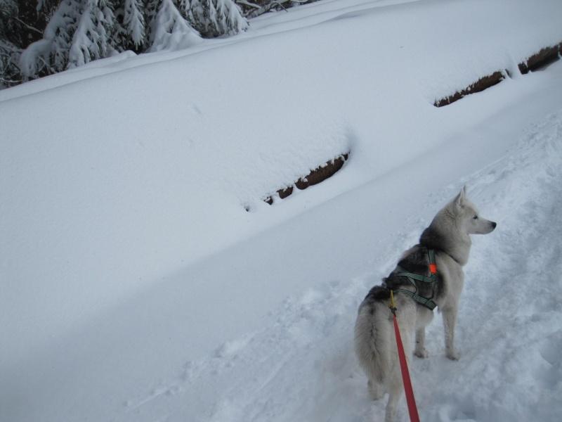 Nouvelles courses de Saskia dans la neige 1438