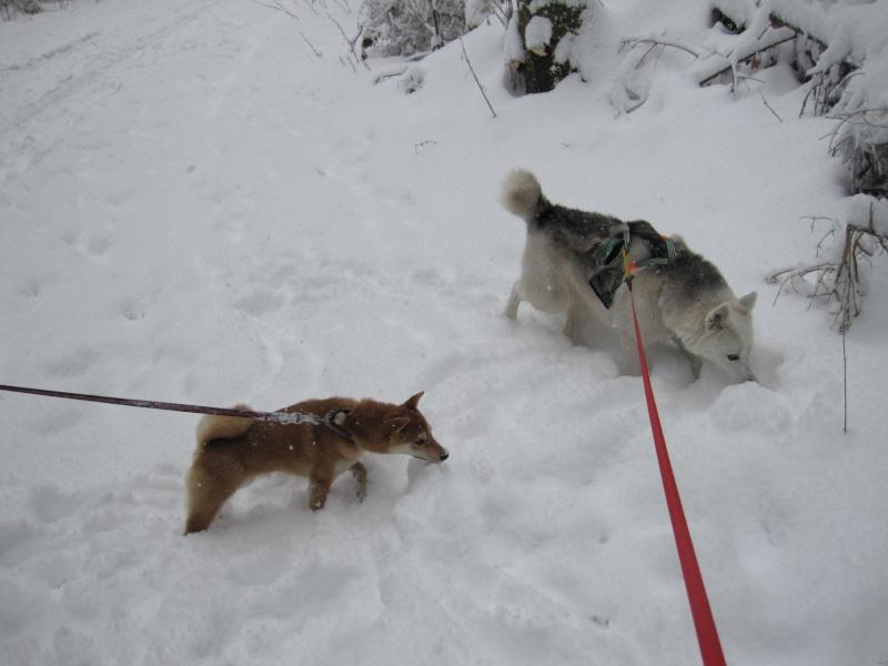 Nouvelles courses de Saskia dans la neige 144