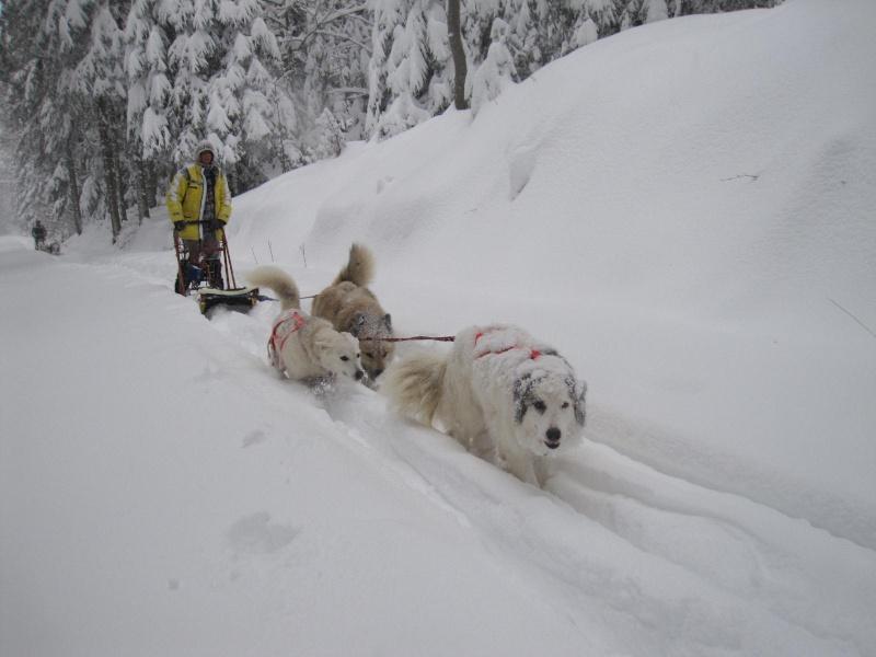 Deux attelages perdus dans 50 cm de neige poudreuse! 1514