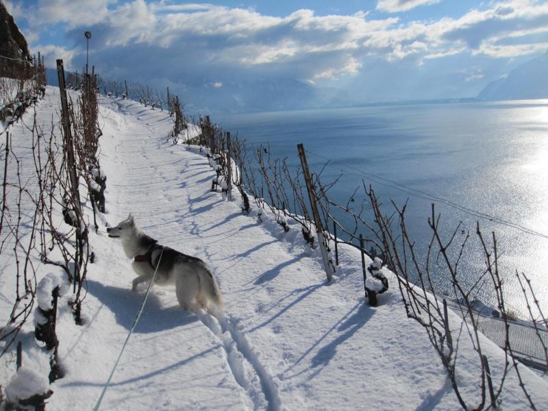 Nouvelles courses de Saskia dans la neige 1532