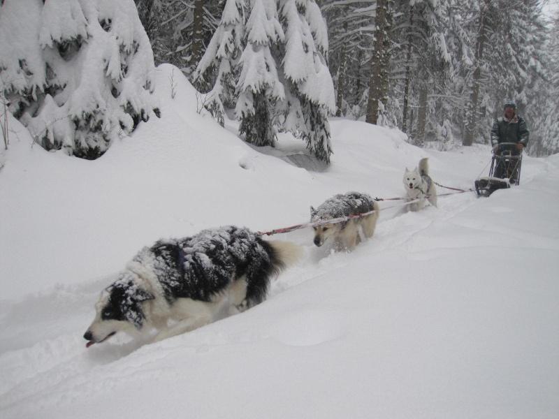 Deux attelages perdus dans 50 cm de neige poudreuse! 1613