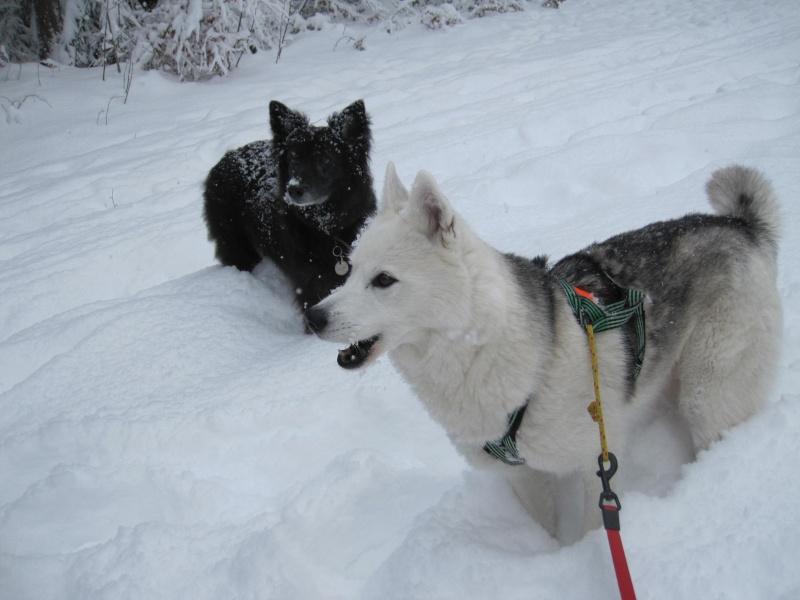 Nouvelles courses de Saskia dans la neige 1625