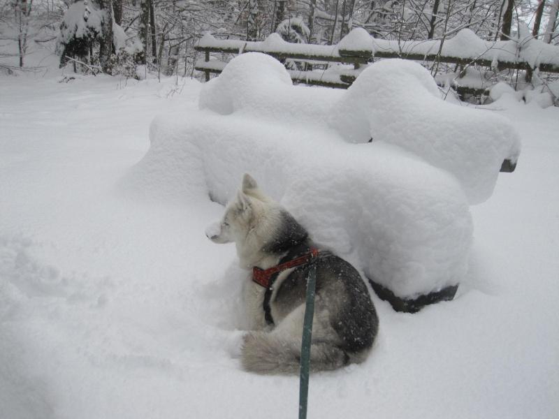 Saskia dans la neige en décembre 2011 1714