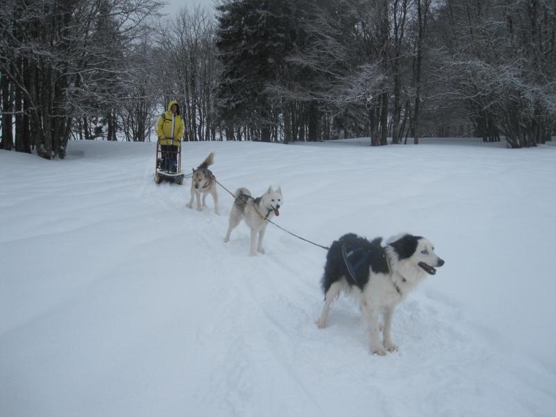Deux attelages sur une neige portante 1719
