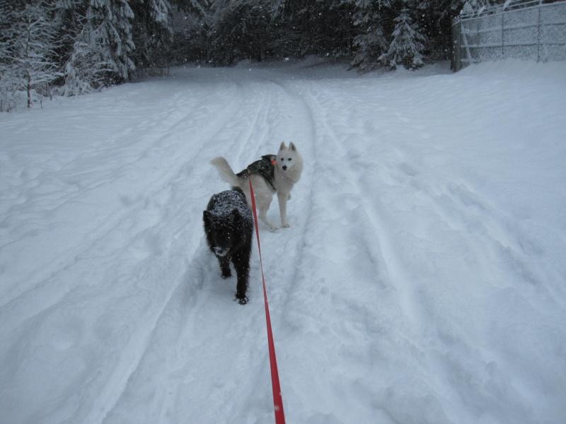 Nouvelles courses de Saskia dans la neige 1724