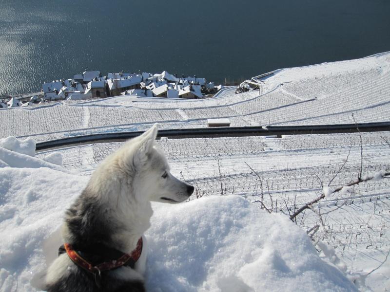 Nouvelles courses de Saskia dans la neige 1725