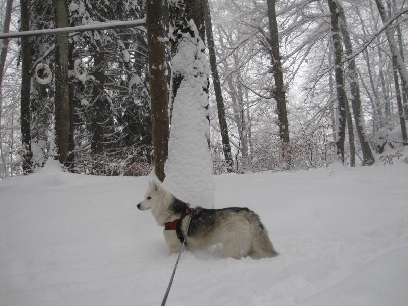 Saskia dans la neige en décembre 2011 1815