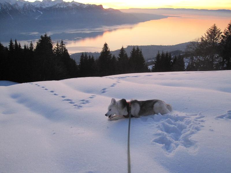 Saskia dans la neige en décembre 2011 1817