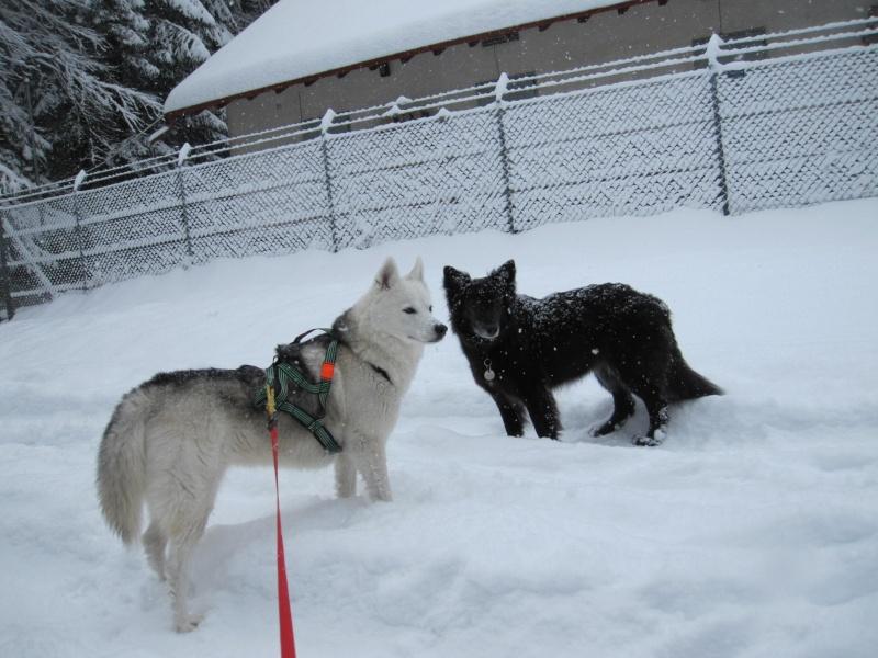 Nouvelles courses de Saskia dans la neige 1828