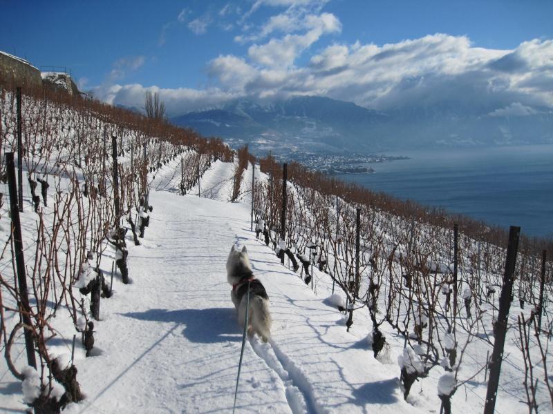 Nouvelles courses de Saskia dans la neige 1829