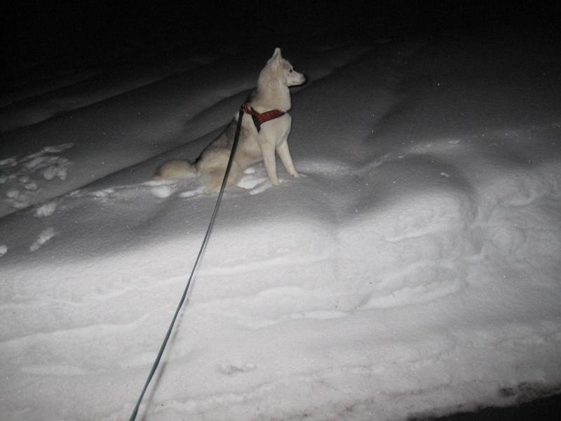 Saskia dans la neige en décembre 2011 1914