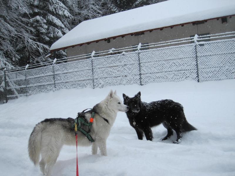 Nouvelles courses de Saskia dans la neige 1923
