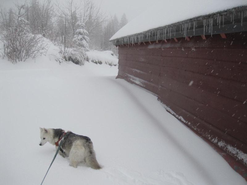Saskia dans la tempête... 2012
