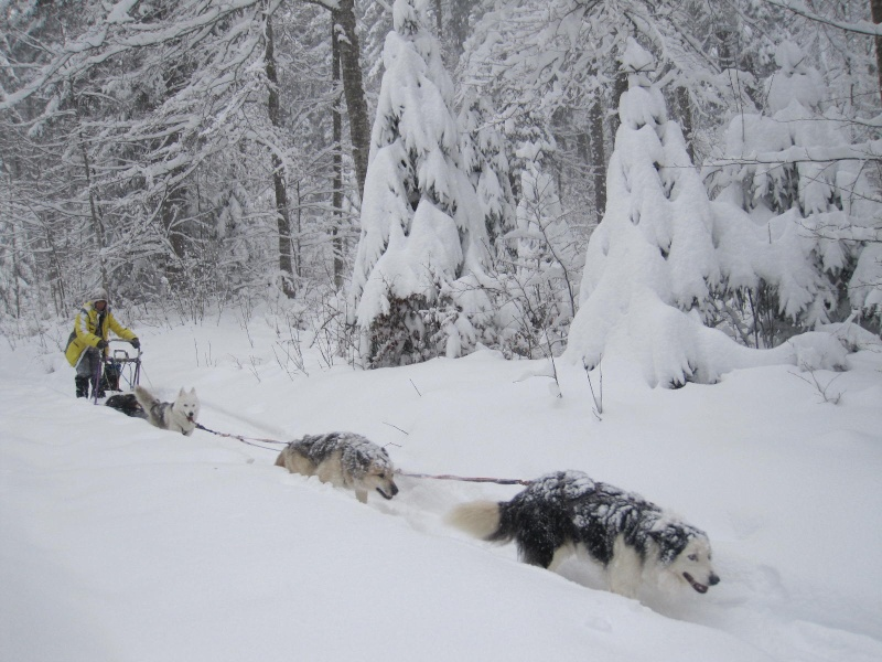 Deux attelages perdus dans 50 cm de neige poudreuse! 2013