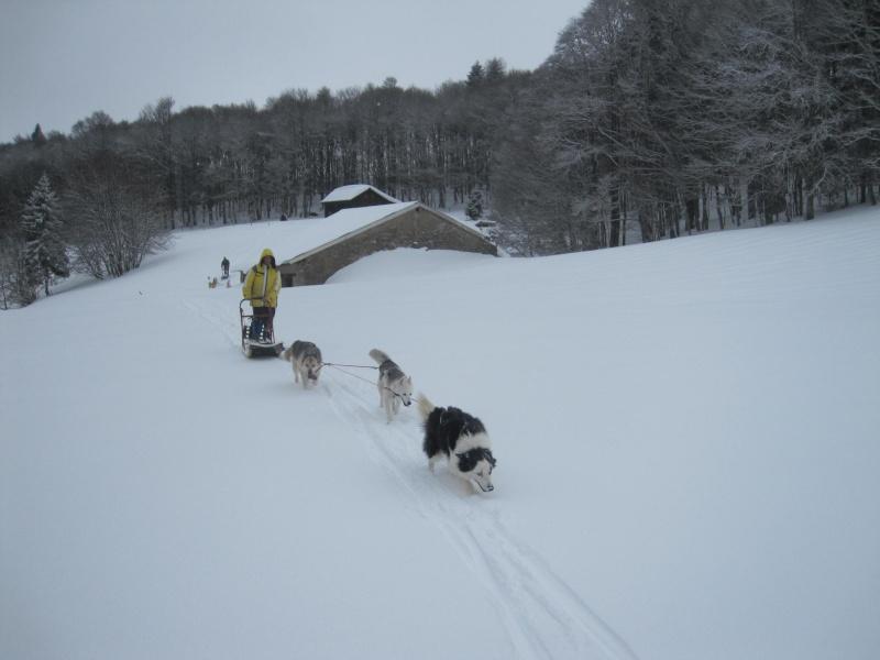 Deux attelages sur une neige portante 2018