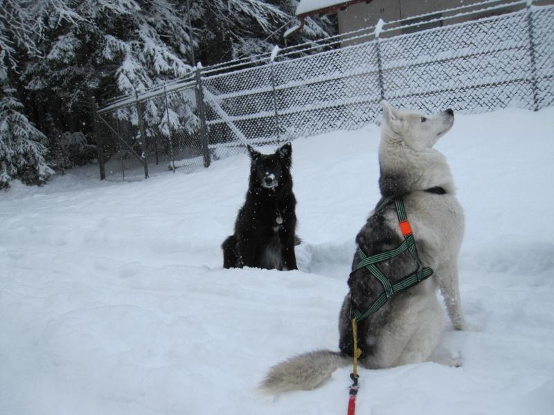 Nouvelles courses de Saskia dans la neige 2023