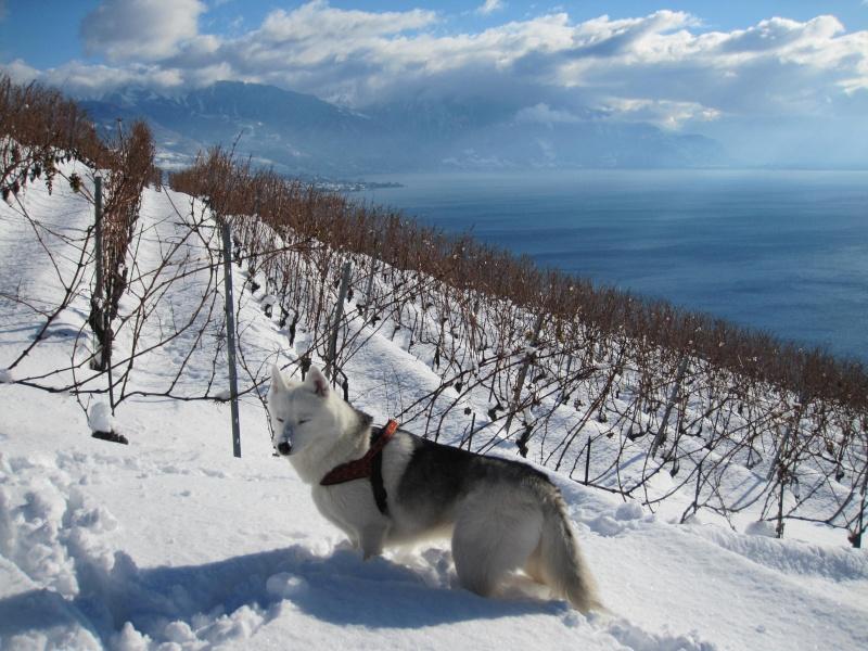 Nouvelles courses de Saskia dans la neige 2024