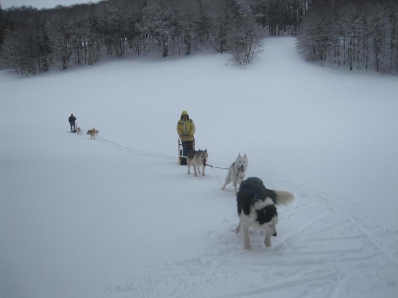 Deux attelages sur une neige portante 2119