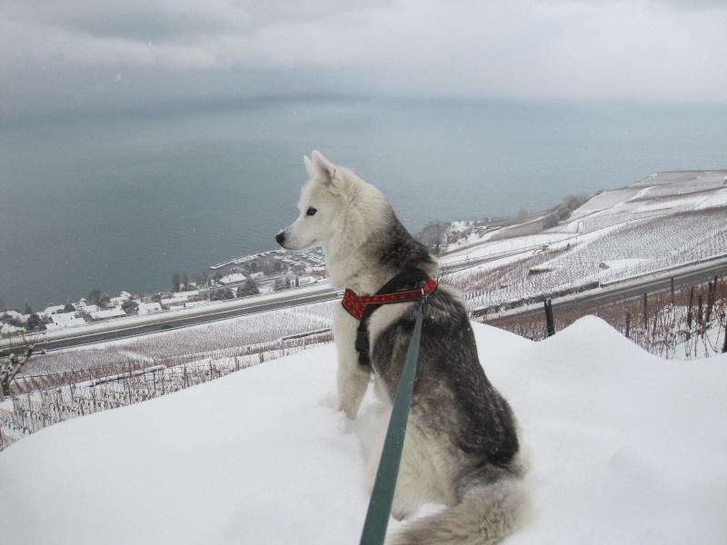 Saskia dans la neige en décembre 2011 218
