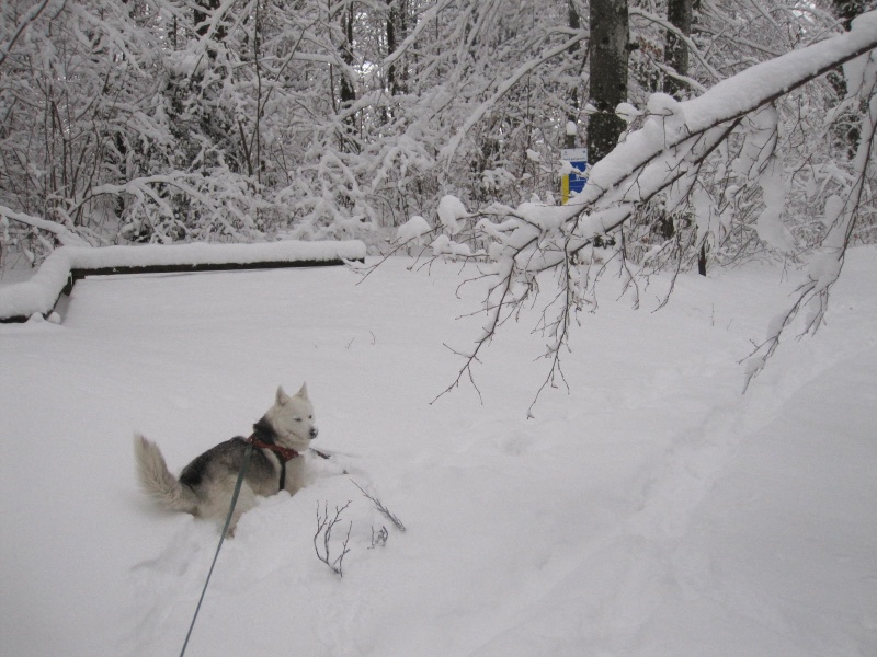 Saskia dans la neige en décembre 2011 219