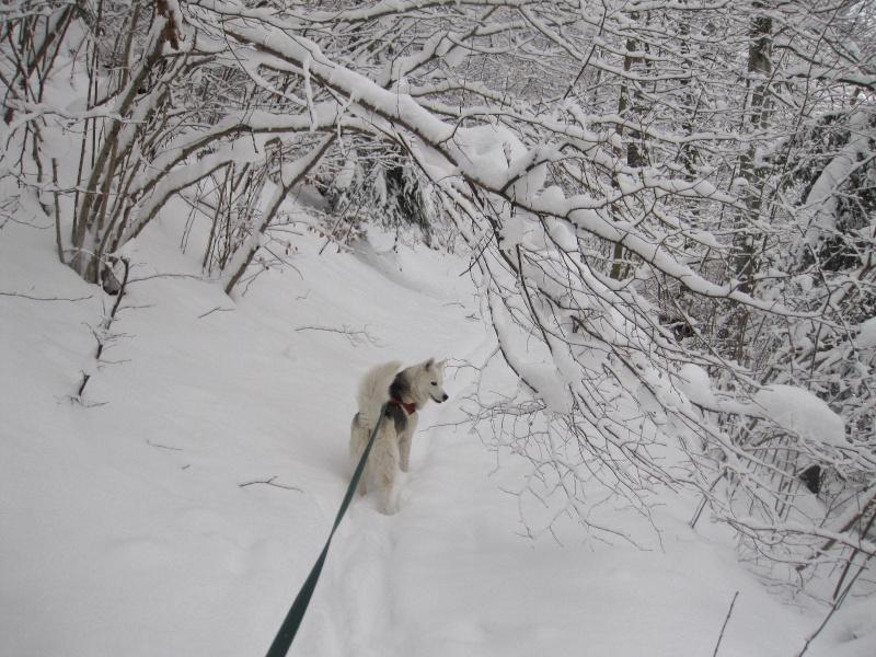 Saskia dans la neige en décembre 2011 220