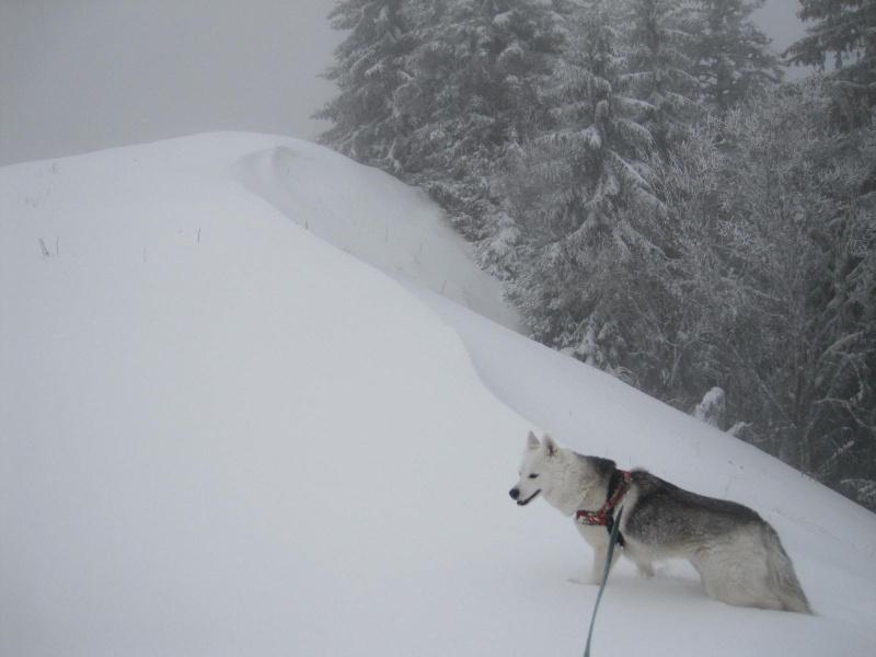 Saskia dans la tempête... 2212