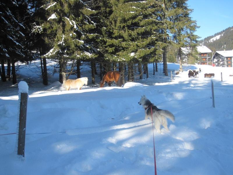 Saskia dans la neige à Morgins 2215