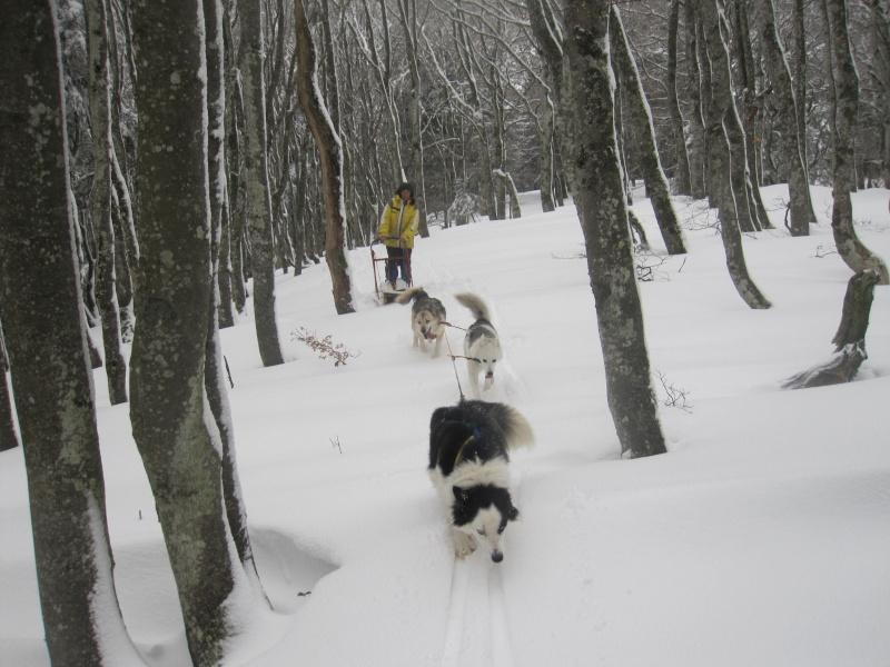 Deux attelages sur une neige portante 2217
