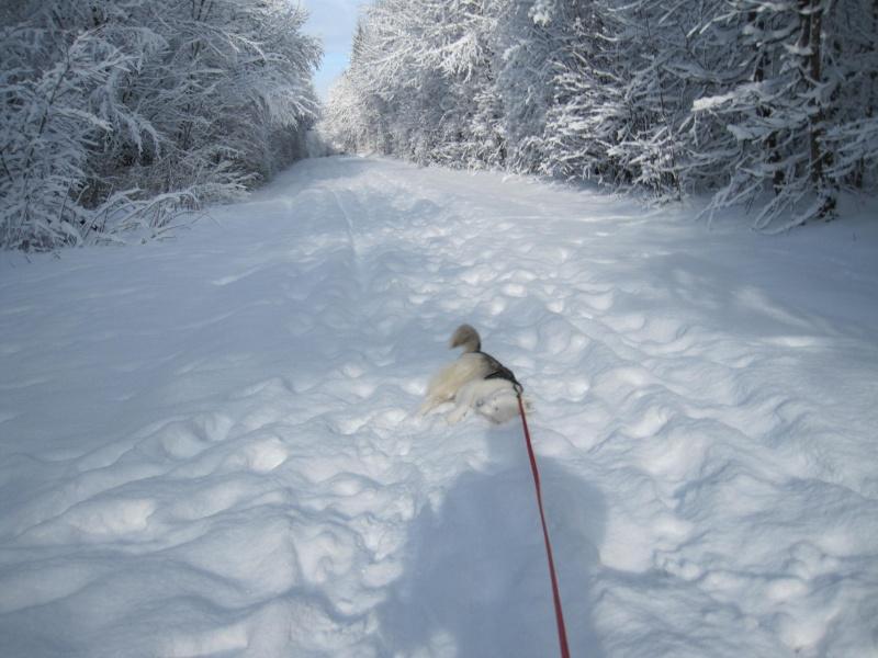 Nouvelles courses de Saskia dans la neige 2222