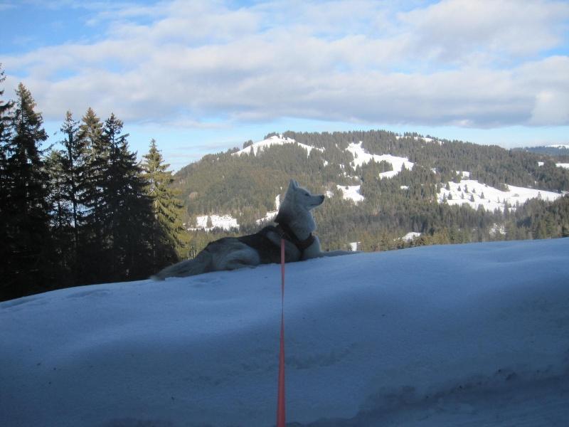 Course et roule-neige 229