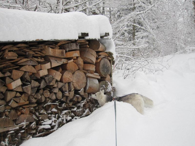 Saskia dans la neige en décembre 2011 2313