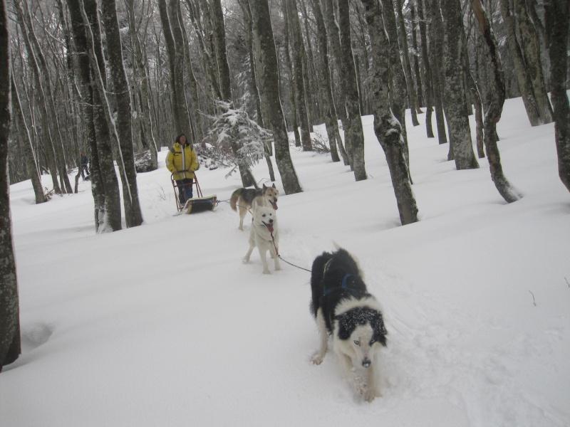 Deux attelages sur une neige portante 2316