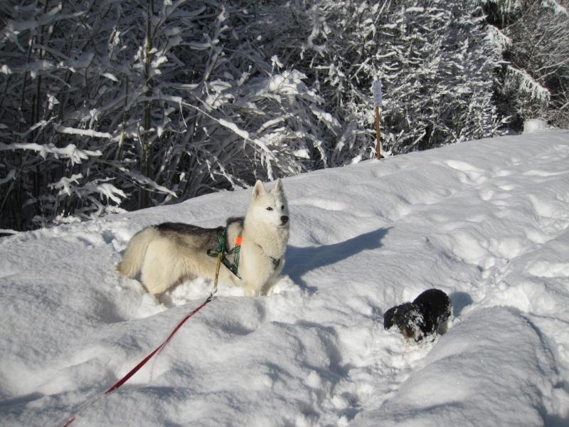 Nouvelles courses de Saskia dans la neige 2320