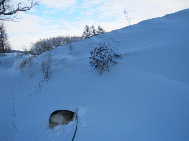 Nouvelles courses de Saskia dans la neige 2321