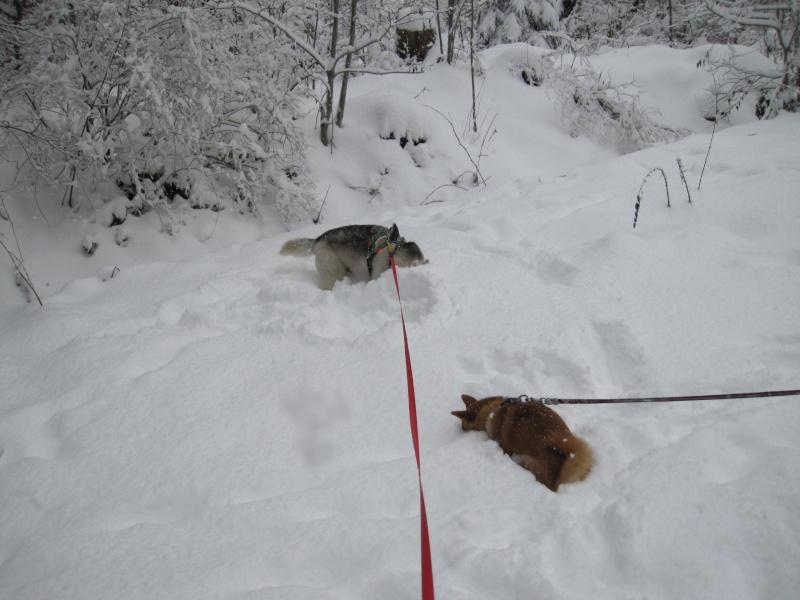 Nouvelles courses de Saskia dans la neige 241