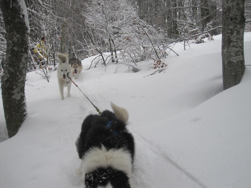 Deux attelages sur une neige portante 2414