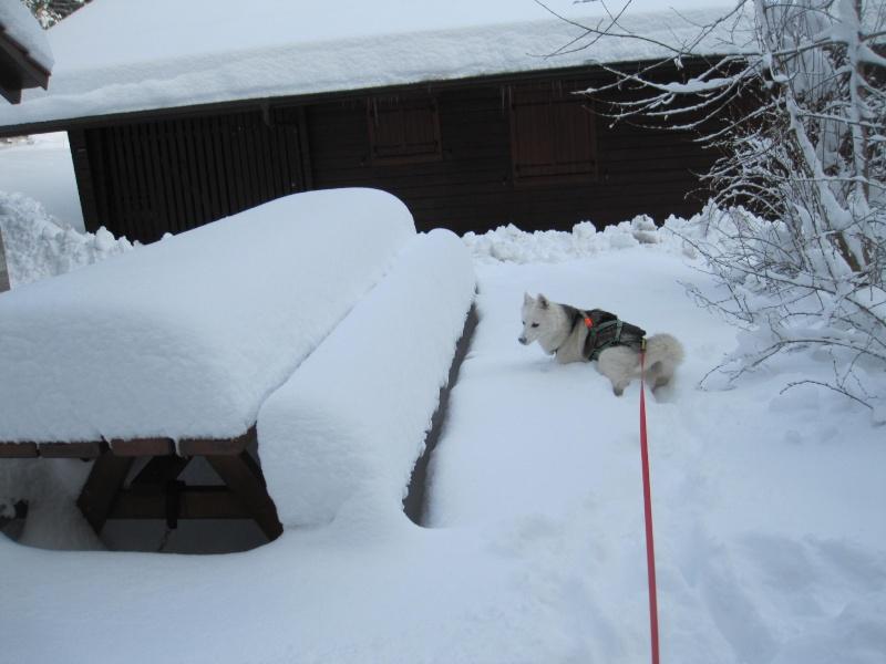 Nouvelles courses de Saskia dans la neige 245