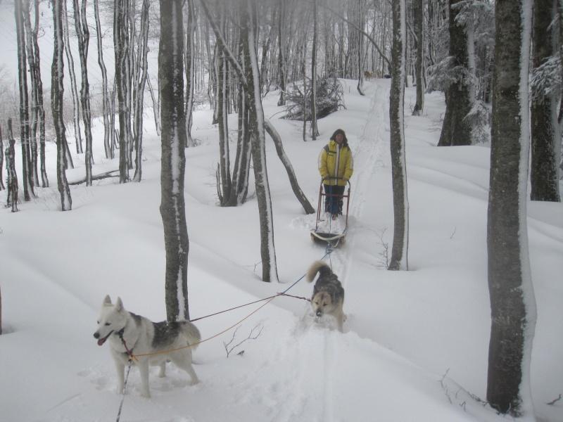 Deux attelages sur une neige portante 2515