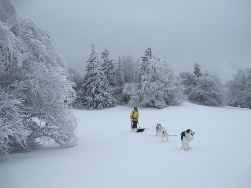 Deux attelages sur une neige portante 2613