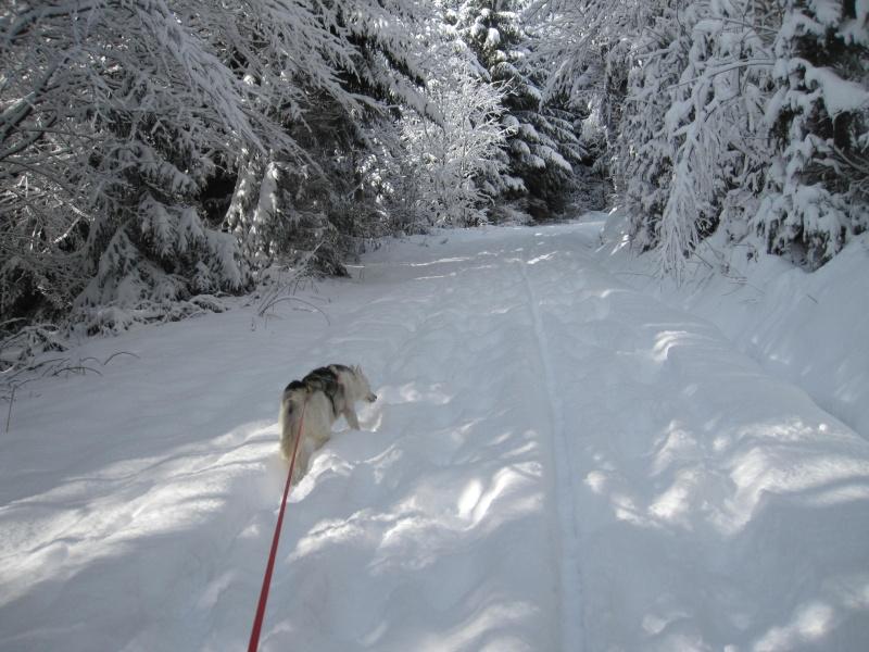 Nouvelles courses de Saskia dans la neige 2617