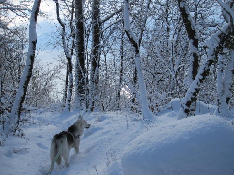 Nouvelles courses de Saskia dans la neige 2716