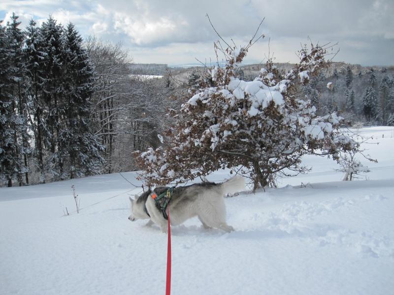 Nouvelles courses de Saskia dans la neige 2916