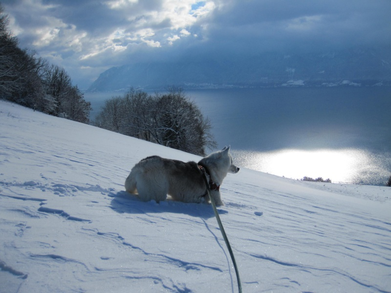 Nouvelles courses de Saskia dans la neige 3016