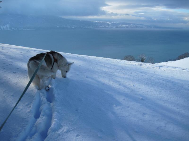 Nouvelles courses de Saskia dans la neige 3114