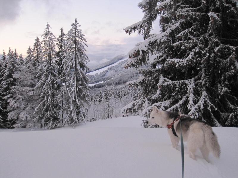 Enfin de la neige !  318