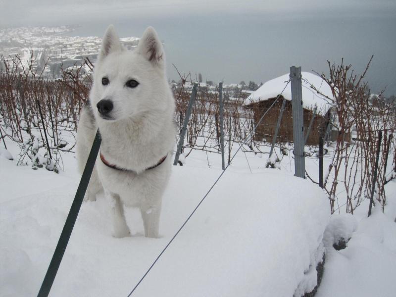 Saskia dans la neige en décembre 2011 319
