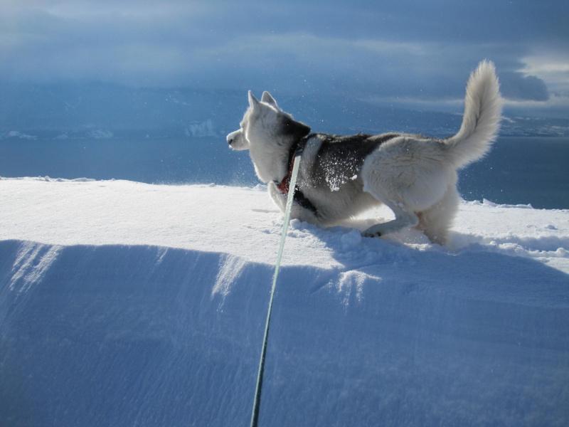 Nouvelles courses de Saskia dans la neige 3216