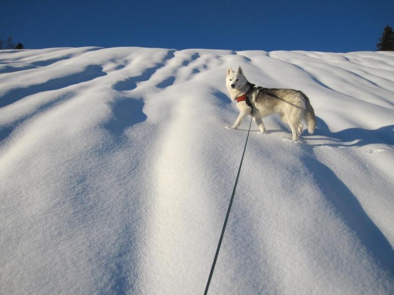 Saskia dans la neige en décembre 2011 324