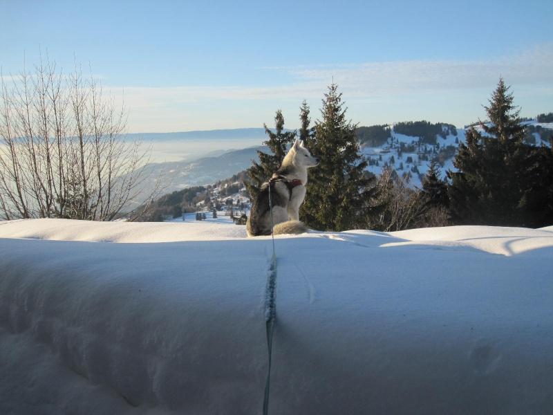 Saskia dans la neige en décembre 2011 325